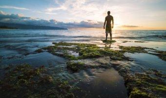 Le lithothame, l'algue anti-acidité