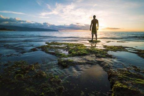 Le lithothame, une algue riche en calcium