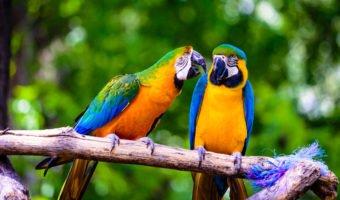 Perroquet, adoptez l'oiseau rare