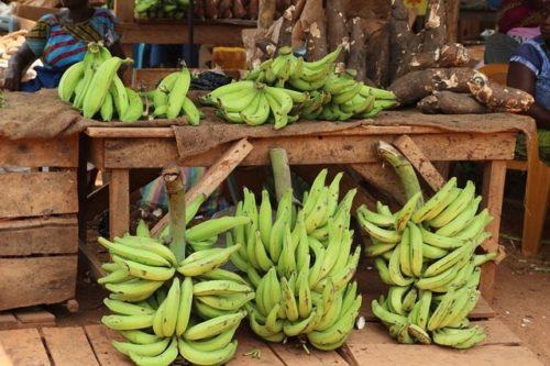 La banane plantain : tout savoir sur cet aliment très gourmand