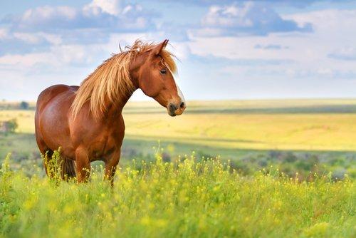 Le cheval, un animal toujours aux côtés de l'homme