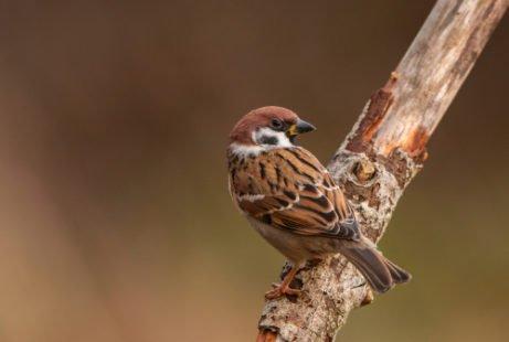 L'oiseau mâle