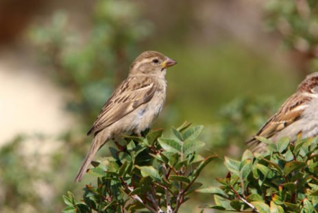 L'oiseau femelle