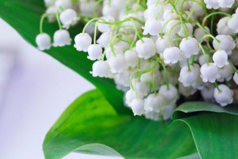 Une fleur porte-bonheur