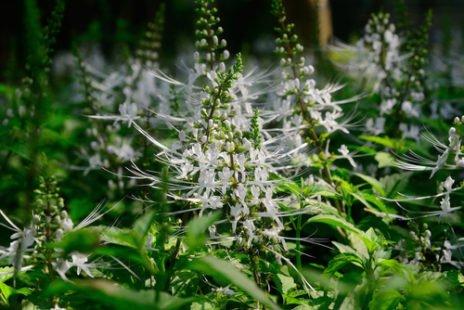 Découvrez toutes les propriétés médicinales de cette plante