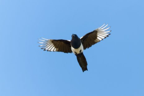 Un oiseau sauvage réellement intelligent