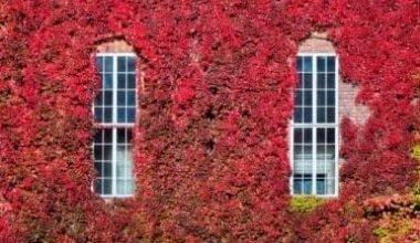 Photo of La vigne rouge, le remède naturel pour les problèmes circulatoires et veineux