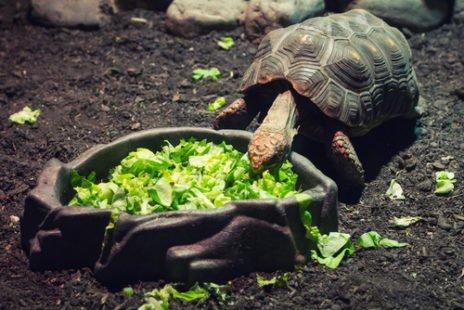 La tortue de terre, adorée des enfants et facile à vivre
