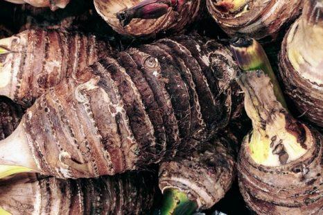 Les propriétés nutritionnelles du taro