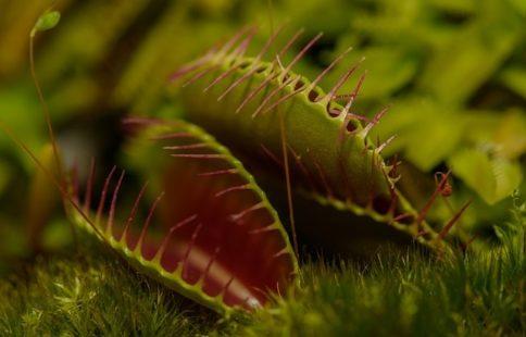 Quelles sont les espèces de plantes carnivores ?
