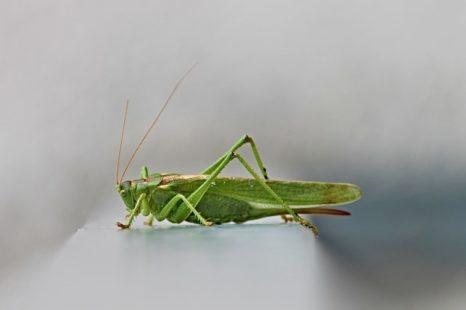 Insecte comestible : zoom sur les plus célèbres