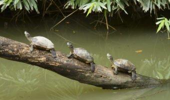 Mon enfant a envie d'une tortue d'eau !