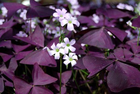 Une plante originale facile à cultiver