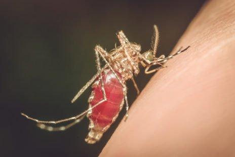 Mieux connaître cette infection qu'est le paludisme