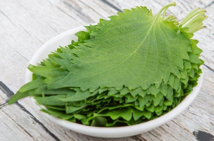 Shiso, plante méidicinale