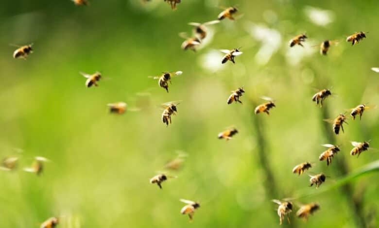 Répulsif à abeilles