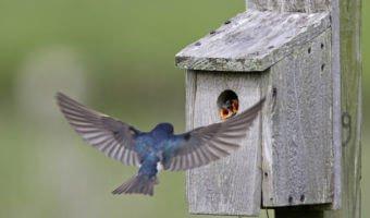 Un nichoir à oiseaux dans votre jardin