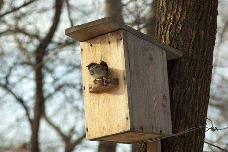 Nichoir à oiseaux : pourquoi et comment en avoir un chez soi ?
