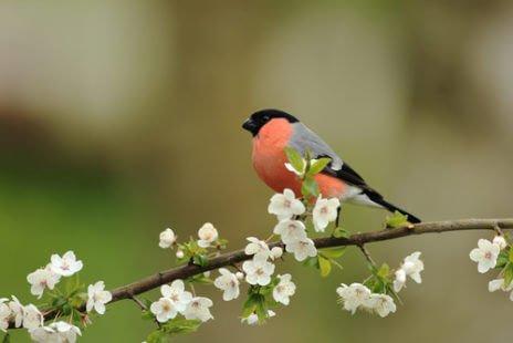 Un petit passereau aux couleurs vives