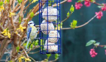 Boule de graisse pour oiseaux, un atout pendant l'hiver
