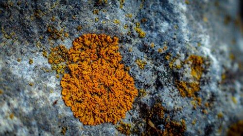https://www.toutvert.fr/wp-content/uploads/2019/06/lichen1.jpg