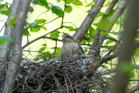 Dans son nid