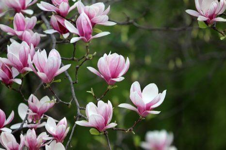 Fleurrosede printemps