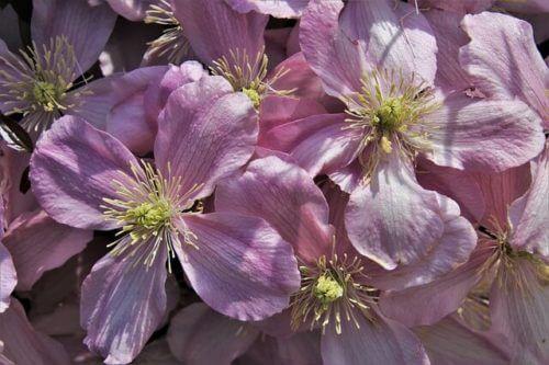 Photo of Fleur rose : une fleur esthétique idéale pour faire passer un message