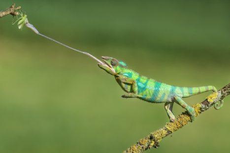 Un reptile aux capacités exceptionnelles