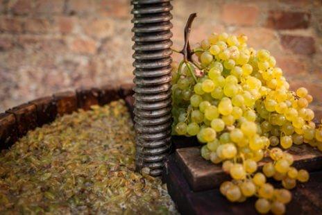 Fermentation du jus de raisin en vin