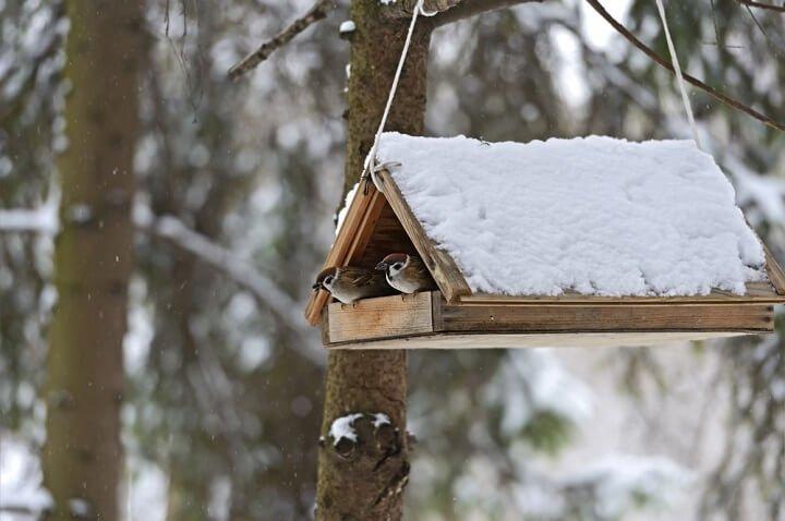 Photo of Une mangeoire à oiseaux dans mon jardin