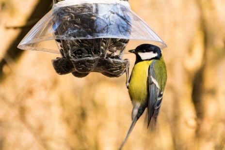 Mangeoire à oiseaux en récup