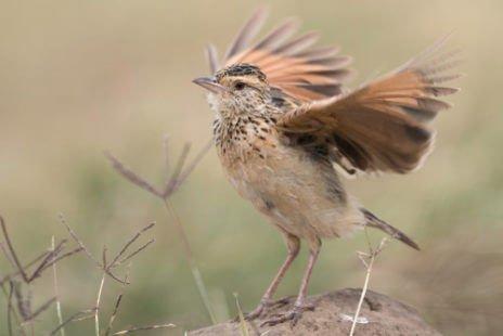 Battant des ailes
