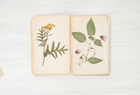 Réalisez votre herbier personnel