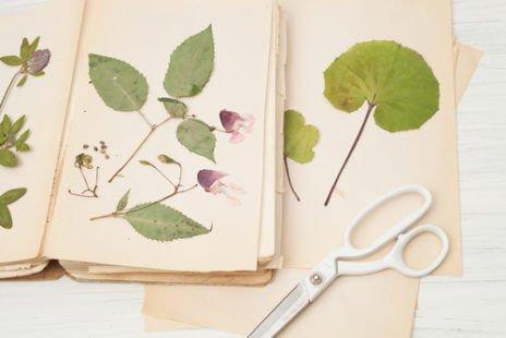 Herboriser : une véritable passion pour découvrir la nature