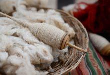 Photo of La laine : une fibre naturelle appréciée pour sa douceur et ses vertus