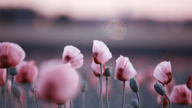 Photo of Le pouvoir des fleurs : tous les secrets des fleurs magiques