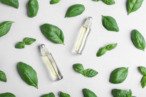 huile essentielle de basilic