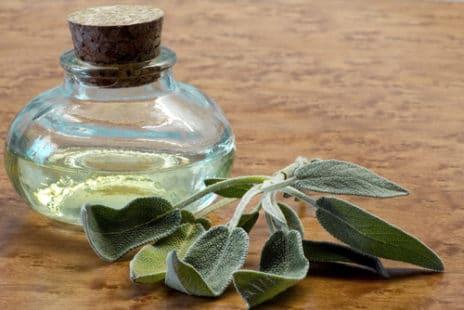 Sauge sclarée ou sauge officinale : deux huiles essentielles à connaître