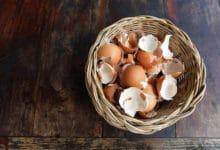 Photo of La coquille d'œuf : de multiples utilisations pour les coquilles d'œuf !
