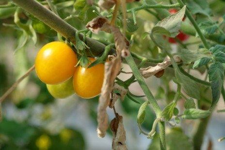quelles sont les plantes que l'on peut cultiver sur un balcon