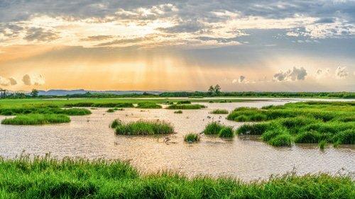 Zone naturelle humide à protéger