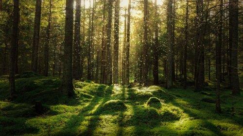 Magnifique tapis végétal des sous bois