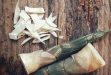 Photo of Pousse de bambou : idéale pour apporter un peu d'exotisme à vos recettes