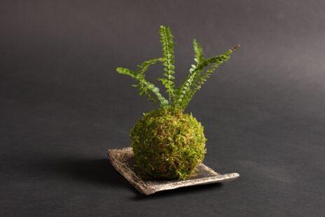 Kokedama, cet art végétal japonais si élégant