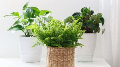 Photo of Les plantes dépolluantes à avoir chez soi