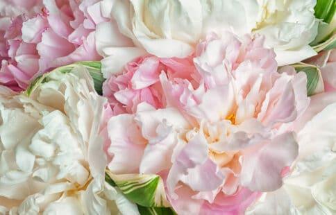 Fleurs aux teintes pâles et pastel