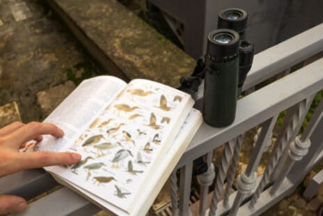 Les accessoires de l'ornithologue