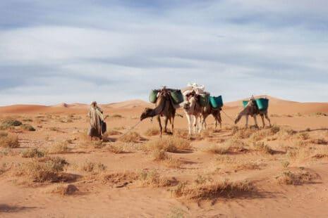 Des chameaux dans le désert