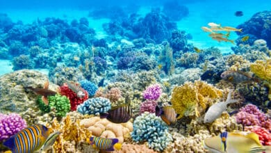 Photo of Barrière de corail : une beauté essentielle à la faune marine